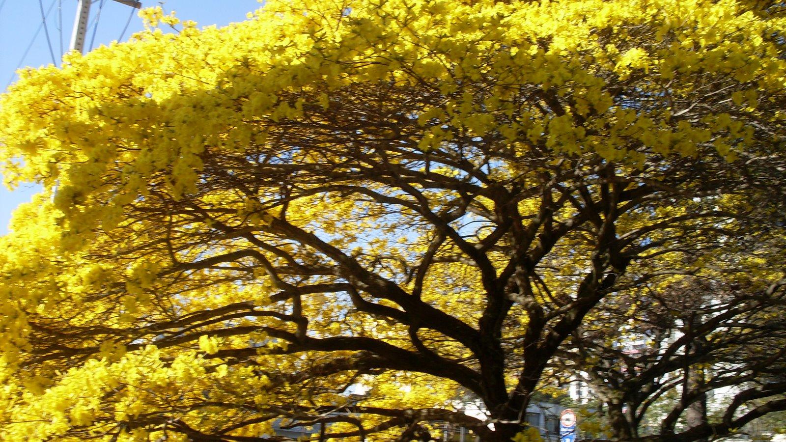primavera Blog da Jacaroa